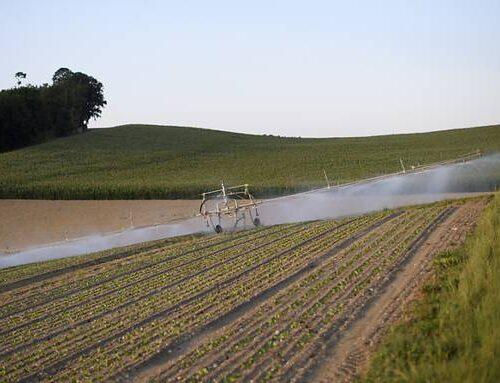 Junge SVP kritisiert Jungfreisinnige: «Sie verstehen nichts von Landwirtschaft»
